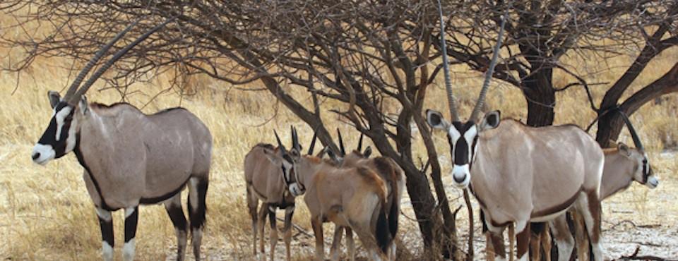 Norra-Namibia-8-dagar