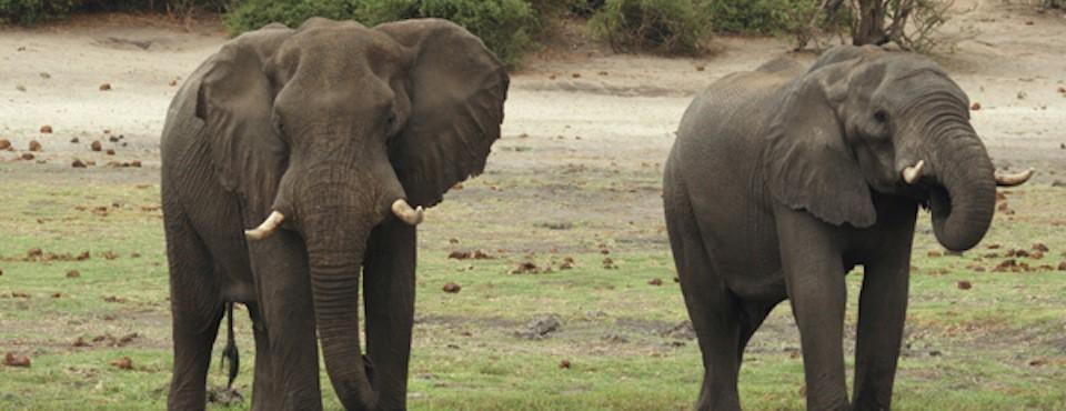 aventyrssafari-namibia-botswana-zambia.jpeg