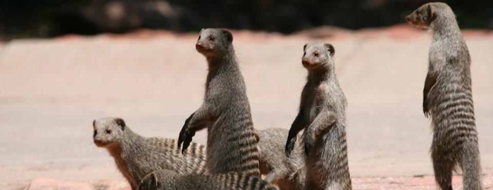 Namiböknen-och-Etosha-6-dagar