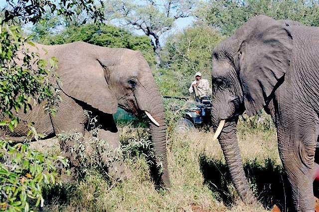 kwa-elephants.jpg