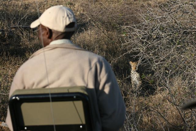 kwa-gamedriveleopard