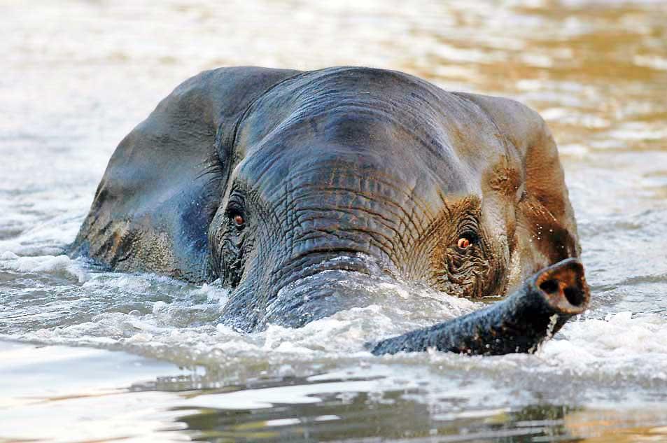 elefantivatten