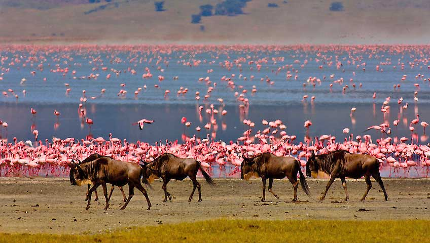 flamingos-ngorongoro