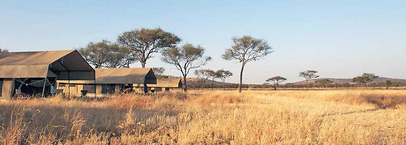serengeti-kati-kati-2013-8-800