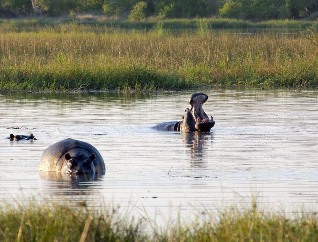 safari i Afrika, Botswana