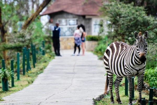Lake Naivasha, zebra, sopa lodge