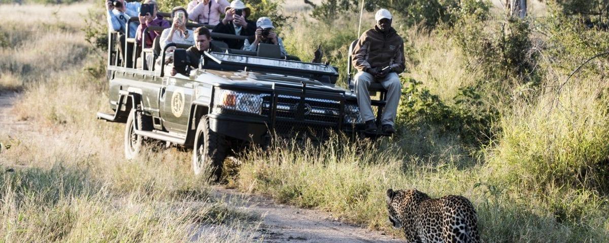 safari Sabi Sands Nottens