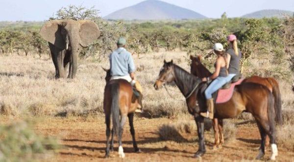 på safari i Kenya kan du rida på hästar som på bilden, om du är i Laikipia-området