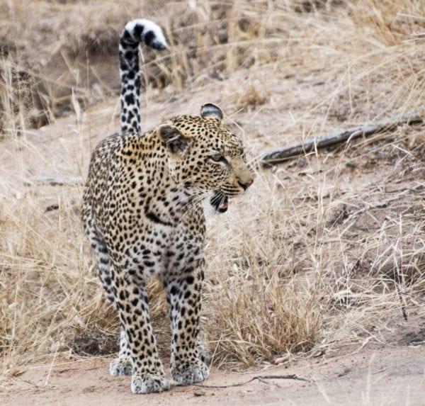 bra bilder på safari