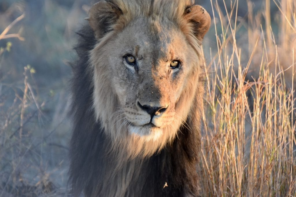 ta bra bilder på safari