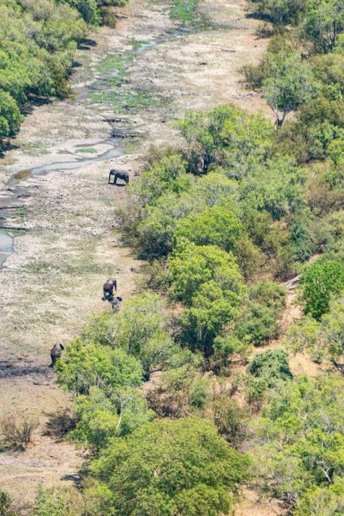 Elefanter helikoptertur Victoriafallen