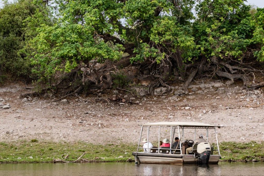 Lejon från Chobefloden, Chobe Princess
