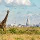 Nairobi National Park, safari nära stan, giraffe