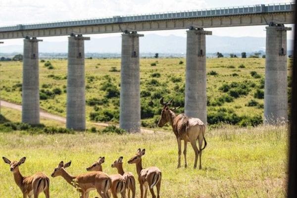 safari i stan, Nairobi National Park