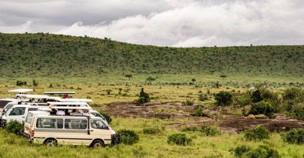 safari i nationalpark Masai Mara