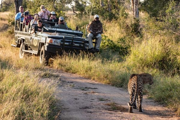 safari i nationalpark eller privat reservat?