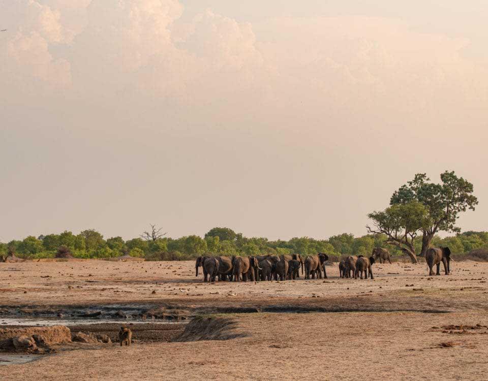 safari i Zimbabwe, nationalparken Hwange