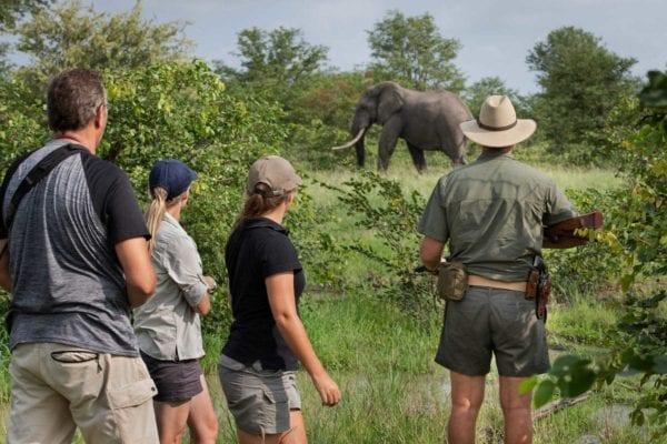 Tre turister och en safariguide tittar på en elefanthanne som passerar i bushen ett tiotal meter bort. På safari i nationalpark kan du inte gå på en walking safari eller bush walk, men det är möjligt i privat reservat?