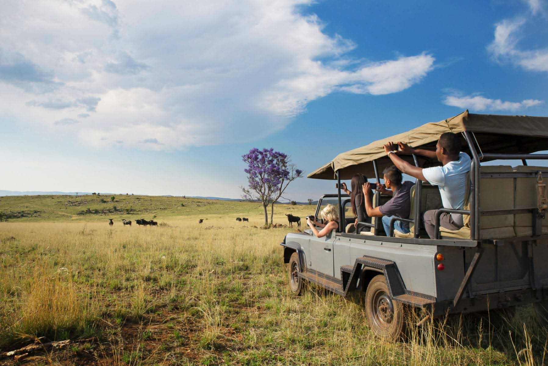 safari i närheten av Johannesburg