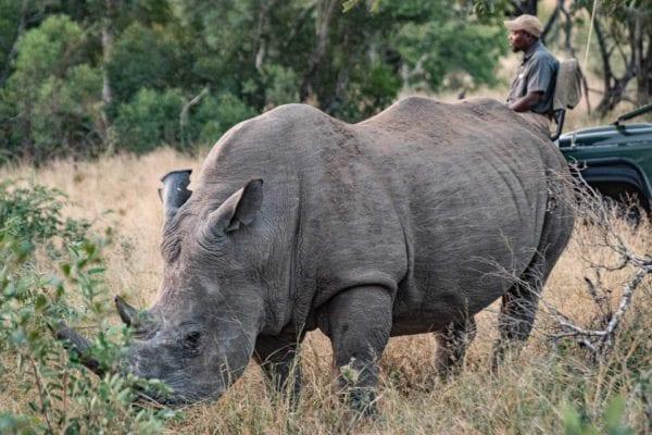 allt du behöver veta om safari