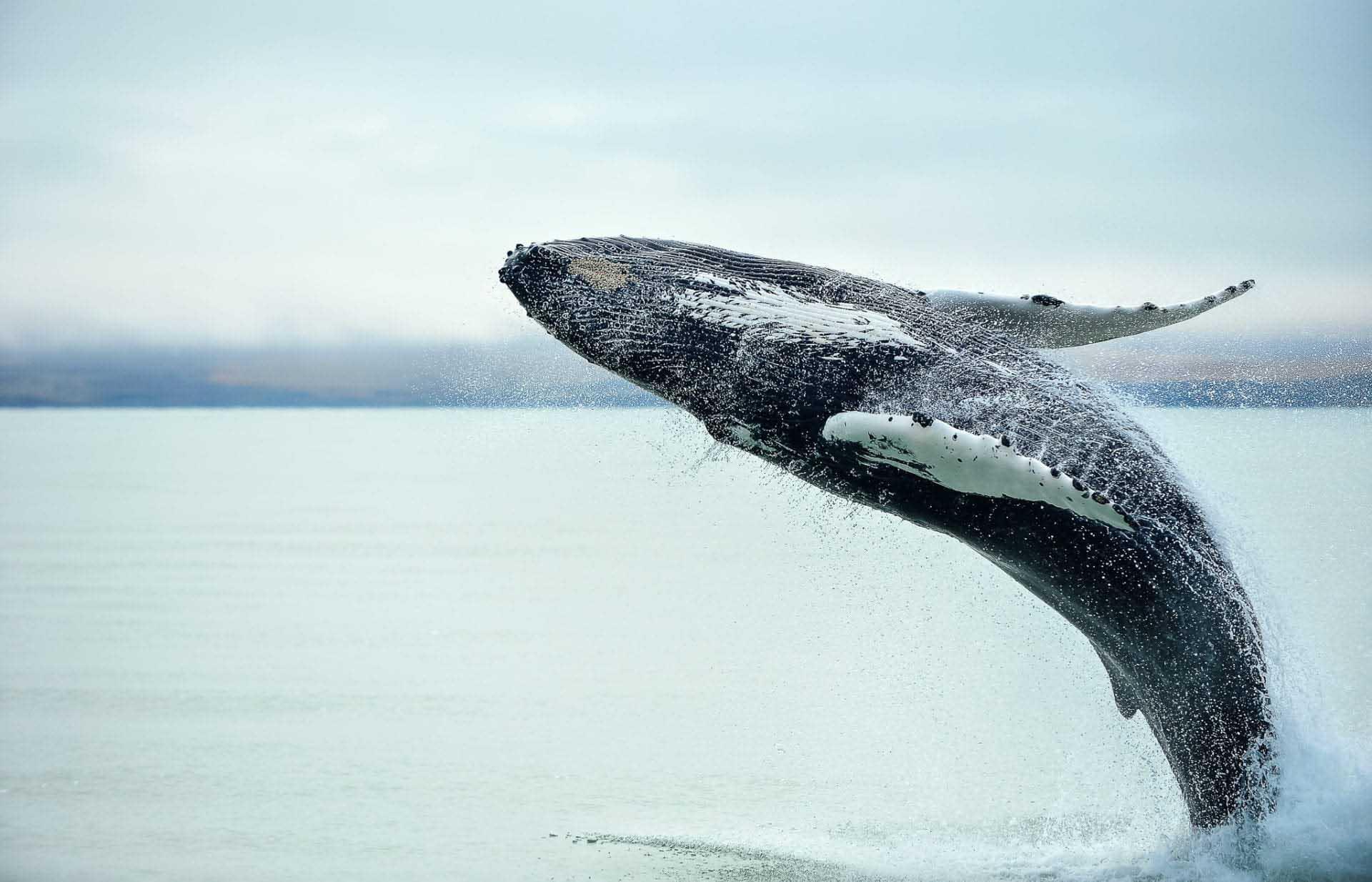 Se valar i Sydafrika och resten av södra Afrika