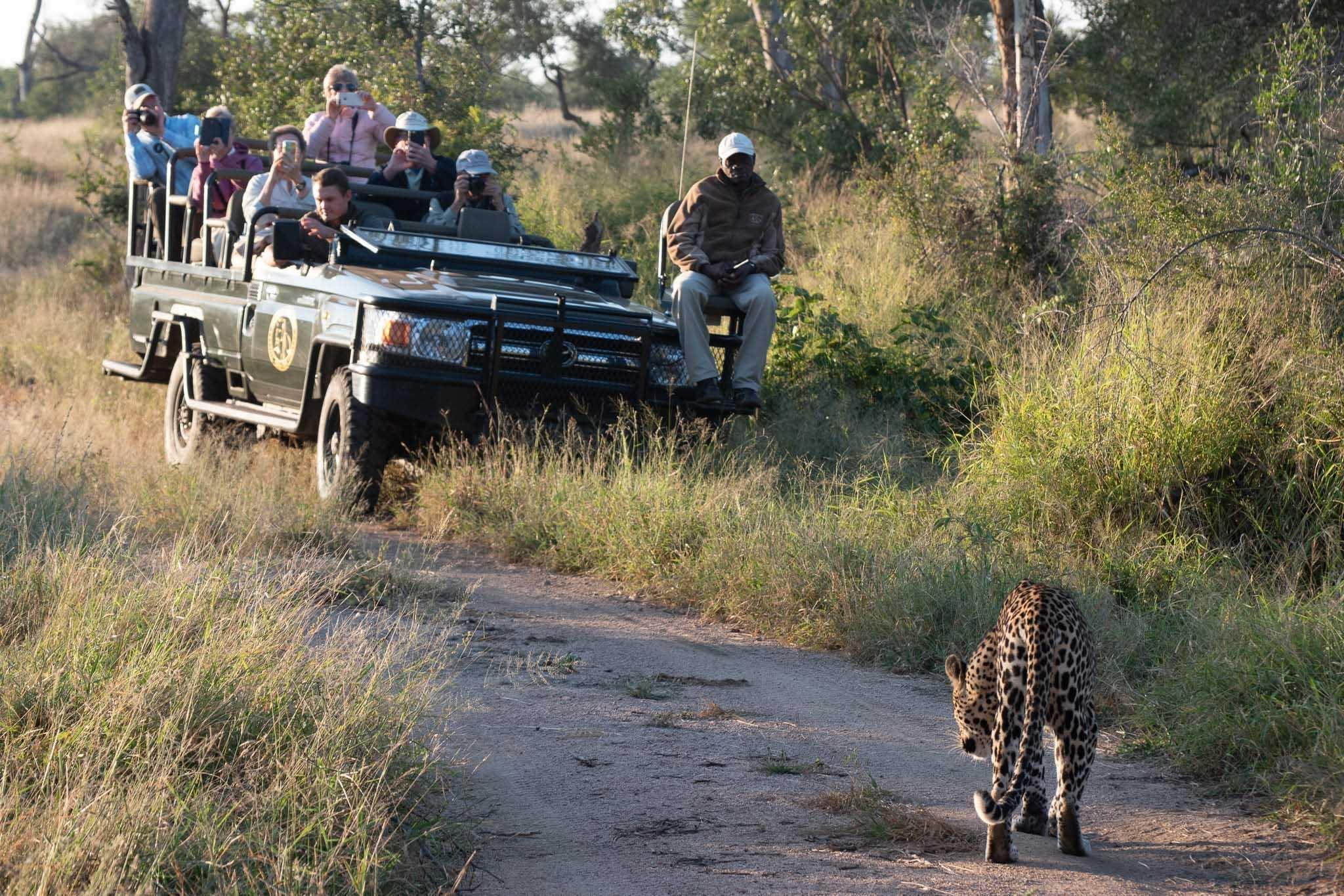 leopard, Kruger, Timbavati