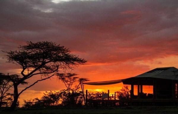 Leopard Hill, Mara Naboisho, safari