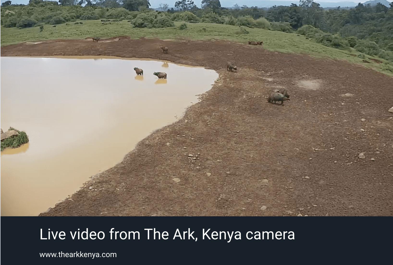 webcam safari the ark kenya