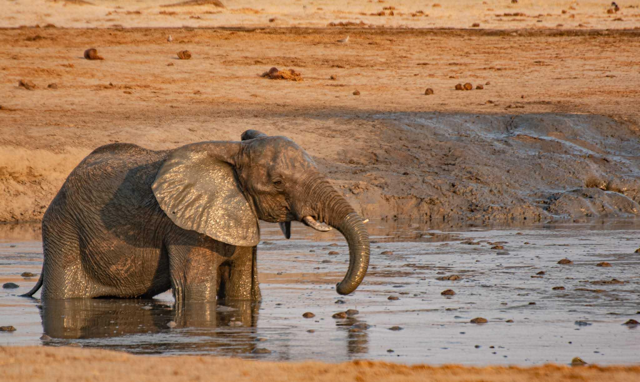 soffsafari elefant