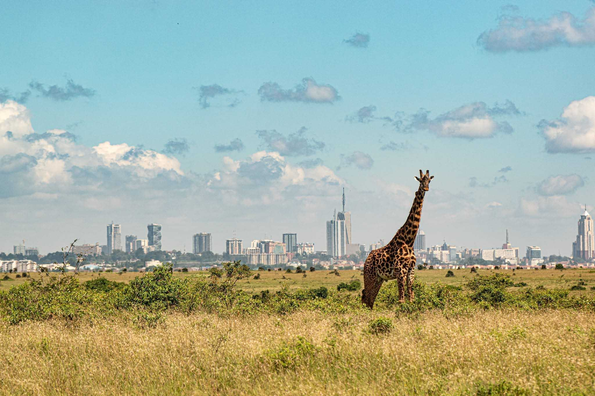 turister åka till kenya, nairobi national park