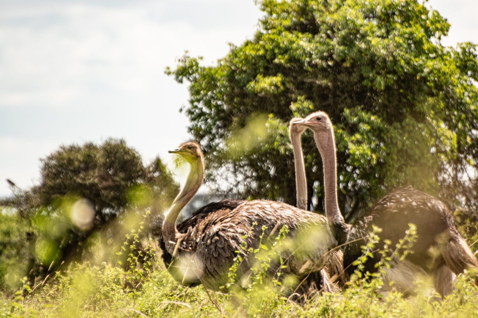 turister åka till kenya
