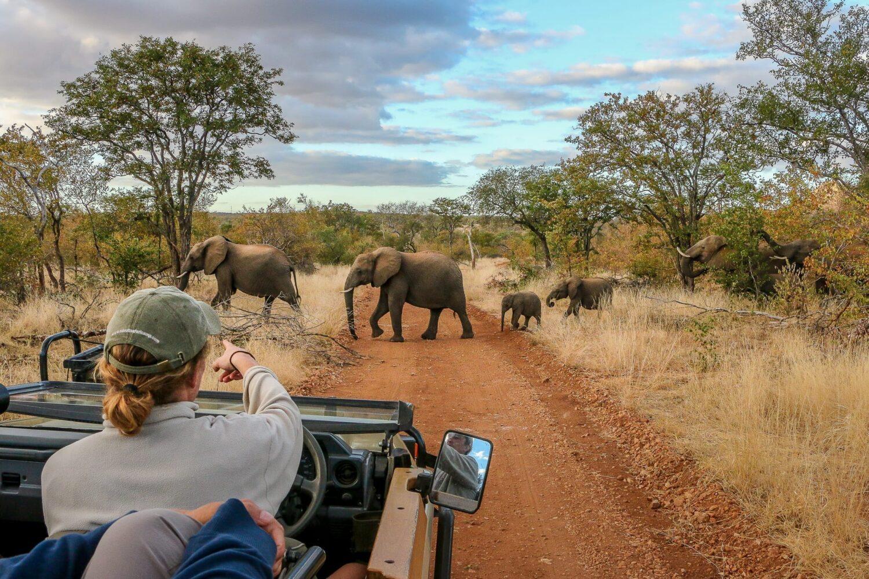 safari i afrika, ndzuti game drive Sydafrika