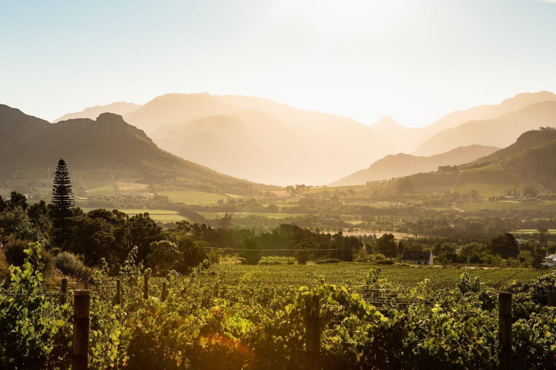 Sydafrikas vinland i skymningen. Bästa tiden att åka hit är i början på december eller slutet på januari