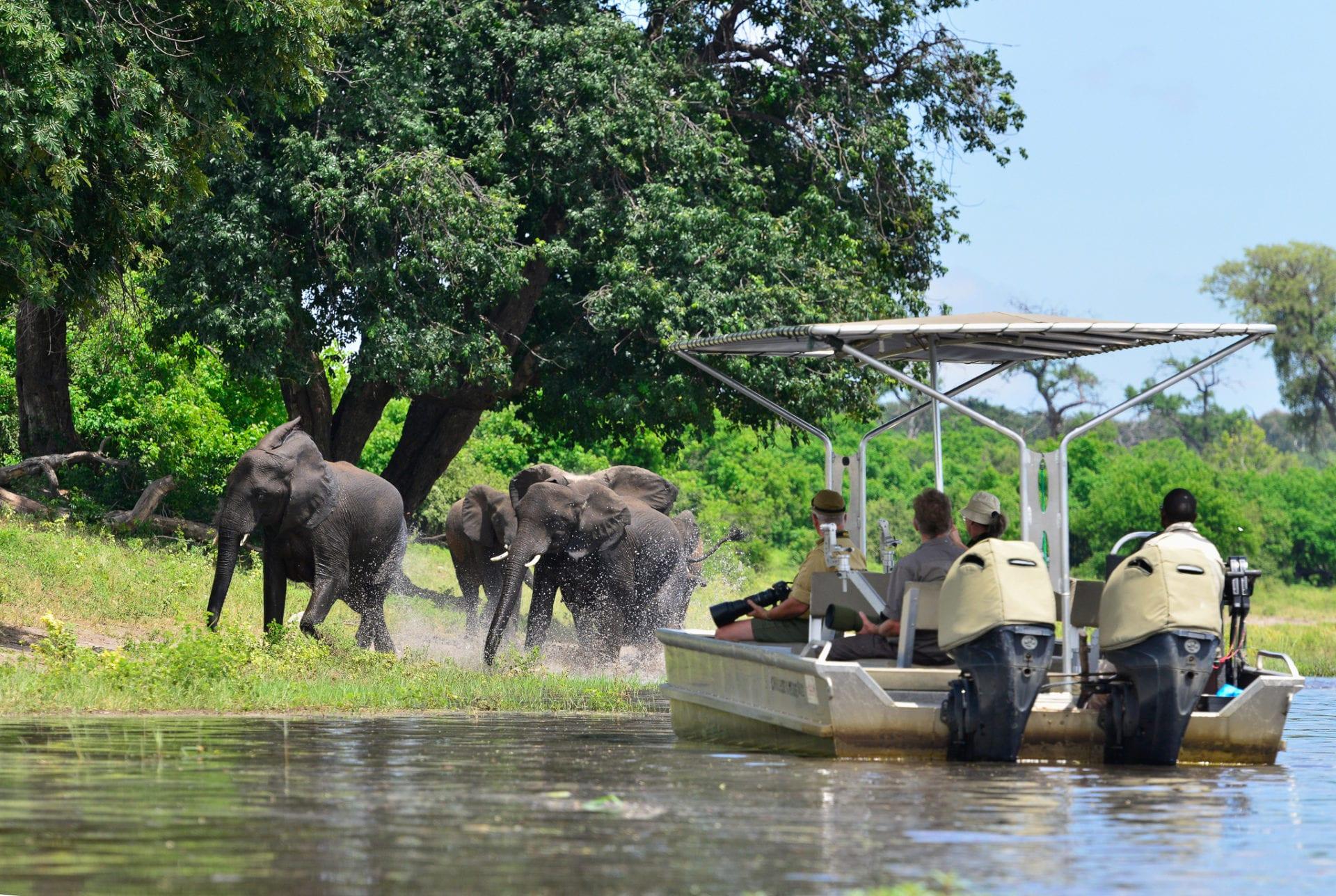 bästa tiden för en safari Afrika varierar men vill du se elefanter från vattnet på Chobefloden kan nu åka nästan när som helst