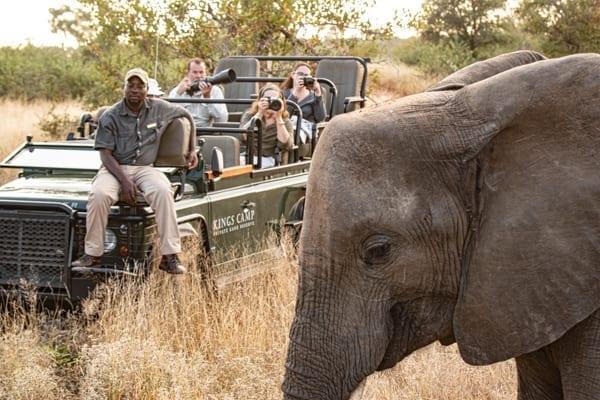 en elefant framför en safaribil i Krugerparken. På bilen syns en spårare sitta till synes oberörd. Det är vanligt med spårare när du är på safari i Afrika, särskilt i Sydafrika.