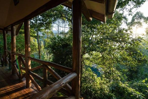 en balkong i snidat trä med utsikt över skogen, första stoppet på ditt äventyr med bergsgorillor i Uganda