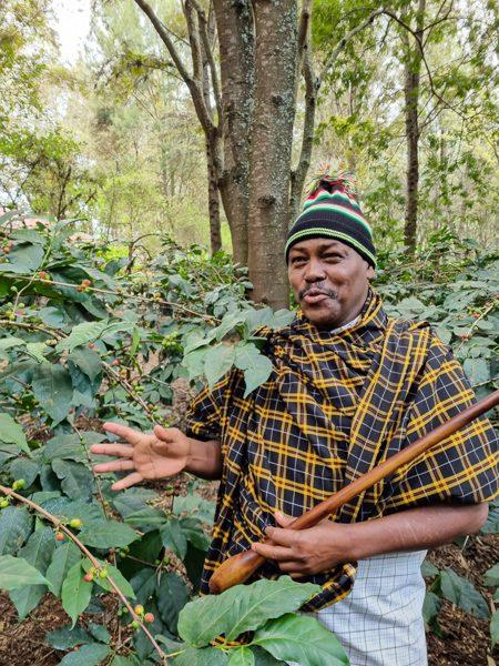 Babadingi står framför en kaffebuske och berättar om kaffebönans väg till din kaffekopp.