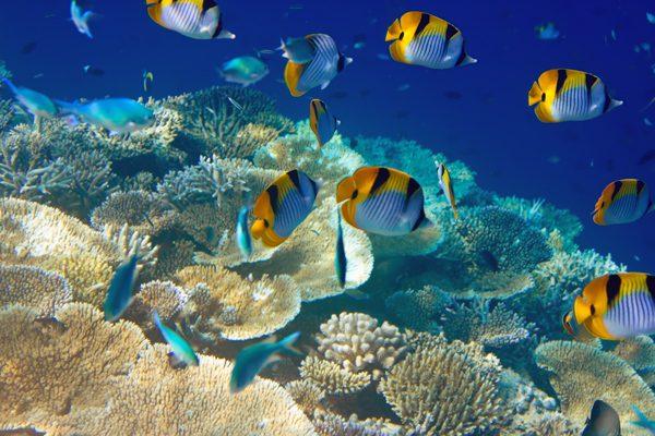 Färgglada fiskar i Indiska Oceanen. Du kan dyka och snorkla i Tanzania eller Kenya.