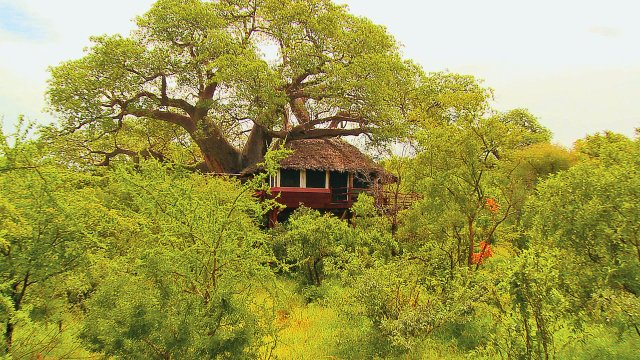 phoca_thumb_l_treetops-tree-house
